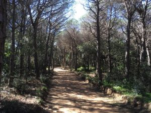 wooded path Costa Brava Spain walking tour vacation