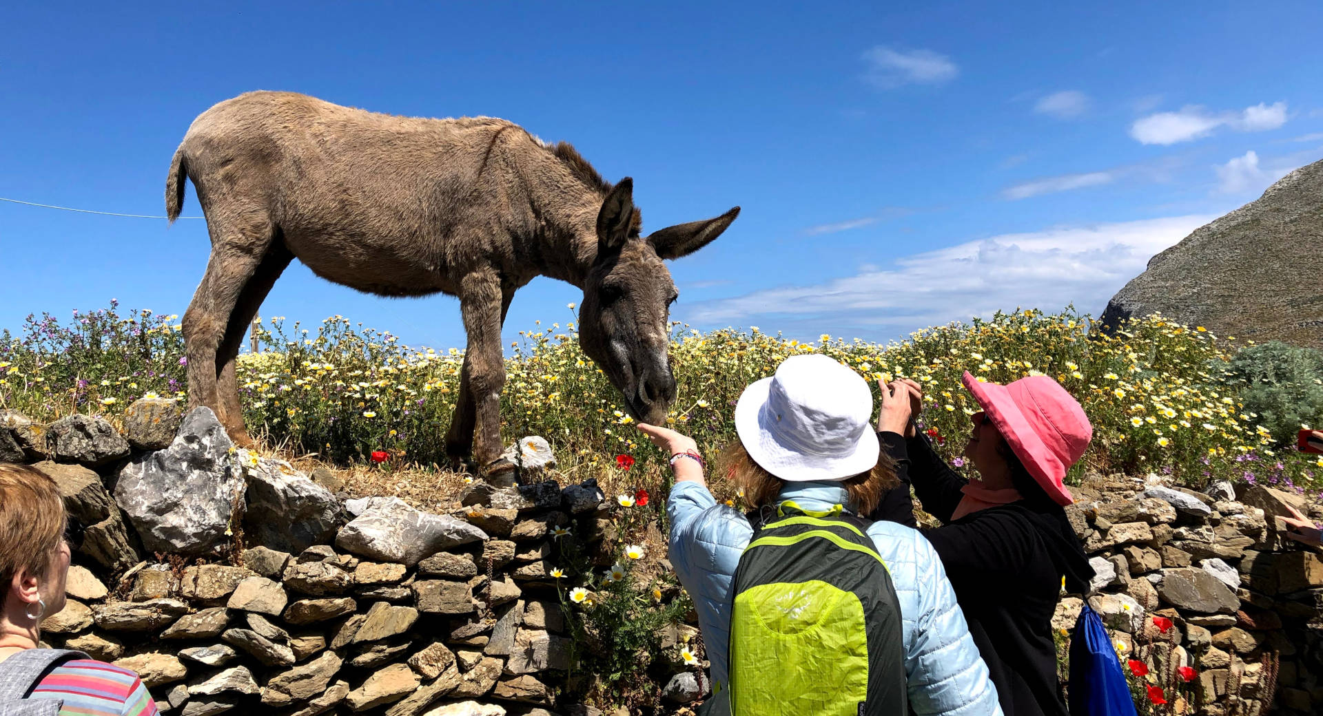 Two women feeding friendly donkey on stone wall with flowers Greece walking tour vacation with The Blue Walk